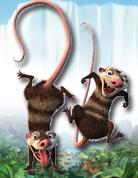 可拉鼠&愛迪<br>(Crash&Eddie)