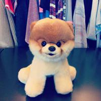 可愛狗明星Boo出玩偶!美國Urban Outfitters網站買的到了!