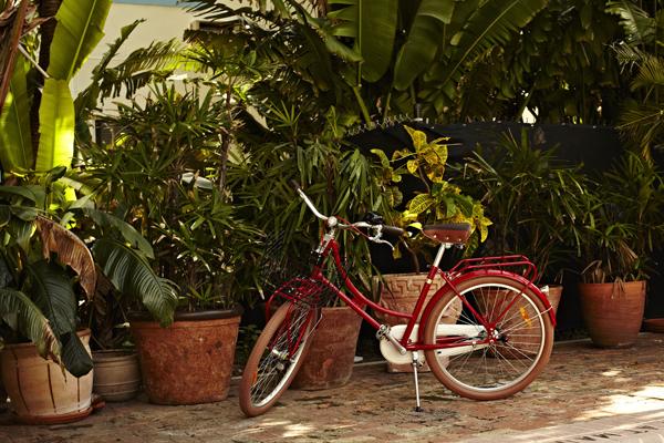 Freehand Miami Hostel有著棕櫚樹與泳池的美妙寬敞空間。