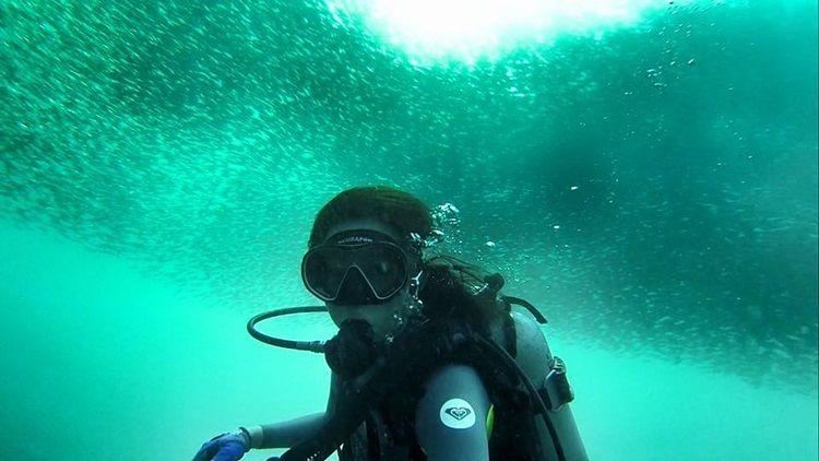 沙丁魚風暴