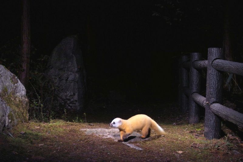 Animal Trail, Nagano (Japan), 2005-2008Color Photograph Collection of the artist. © Manabu Miyazaki