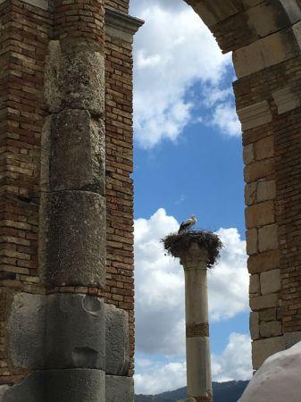伊斯蘭教的聖鳥,大鸛鳥築巢在羅馬聖殿中
