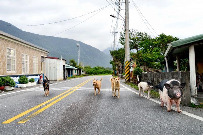 名叫「小小」卻頗有份量的豬仔,和狗友們做夥逛大街,是小路上有趣的風景。
