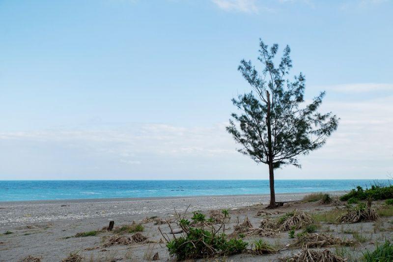 保安林守護著沿海聚落不受風雨侵擾,不僅照顧了附近生活的人,也涵養了一百多種生物。近十年來,歷經海棠、龍王、蘇迪勒等強烈風災,防風林有八成嚴重受損,在林務局努力下緩慢復育。