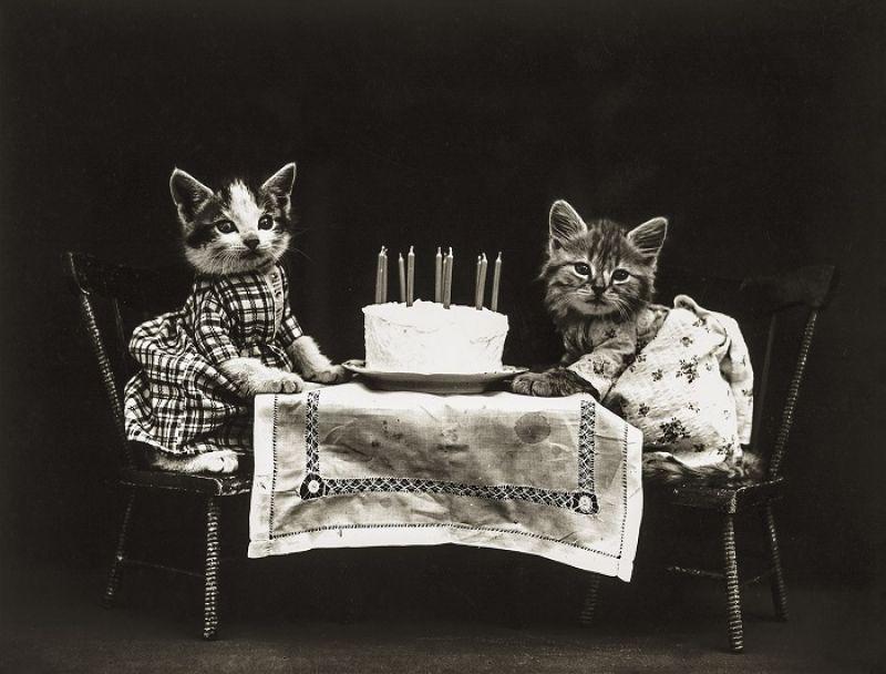想要未來的一歲充滿愛,生日那天就要過得充滿愛。一定要和能讓你覺得充滿愛的人一起過。而讓我產生充滿愛,確信彼此相愛至深的感受的,世上只有我的貓咪。