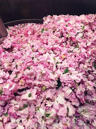花田負責人穆勒先生告訴他,五月玫瑰花一年只生長一次,從採收到萃取無疑是在與時間賽跑,這也造就了她珍貴的秘密。