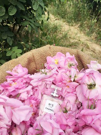 乍聞 N°5 L'EAU,就能深刻感受到無憂無慮、透明的氣息,彷彿艷陽下的花蜜般,與肌膚結合後更散發出空靈的年輕味道。