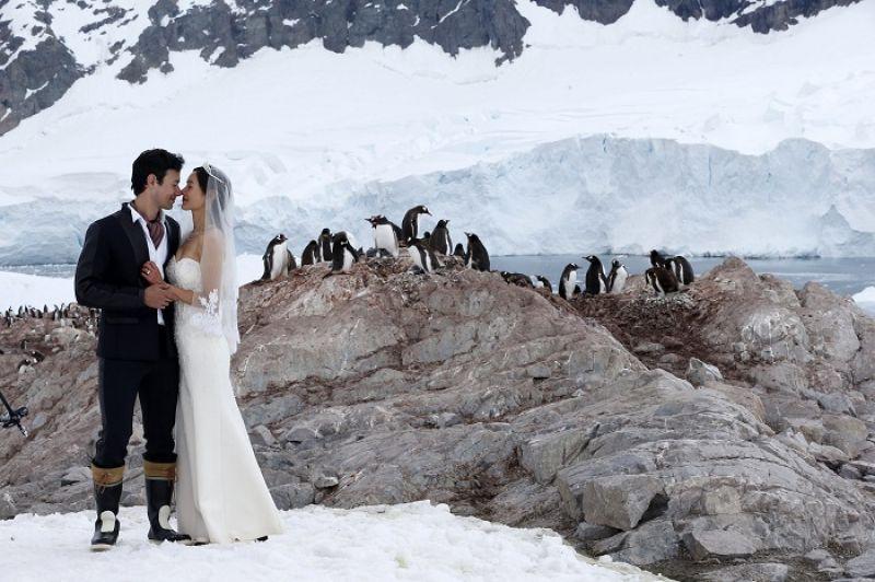 在企鵝的見證下,我們結婚了!