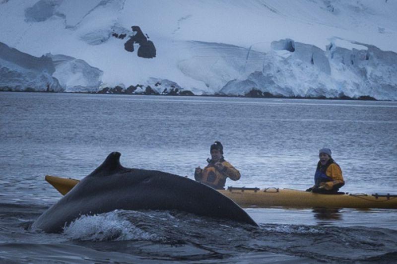 有隻鯨魚想要游上來,距離進到完全可以盯著牠的眼睛,我一直喊著Oh my God!