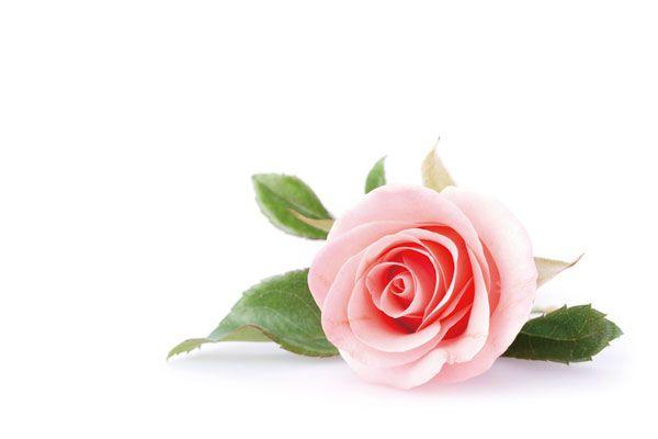 位在花瓣與花萼連接處,位於與植物子房中的胚乳接觸之處,即為孕育花朵生命的胎座。胎座是花朵一切的核心,所有的花瓣、花蕊與花苞都由此展開;有別於果實胎座,花朵胎座更含豐富成長營養及能保護自身的能力。FANCL以先進科技萃取出源自於世界第一玫瑰之國保加利亞的大馬士革玫瑰胎座中的奢華營養,獨家研發出「玫瑰煥活成長精華」,具有極高活性,能加速「膠原蛋白循環」,使肌膚的彈性與緊實層層由肌底撐起,綻放逆齡的青春奇蹟。