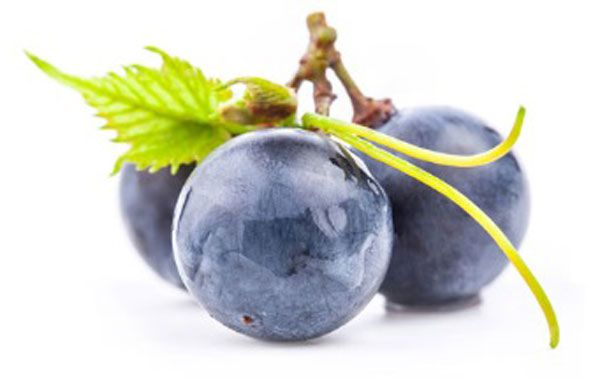 抽取自法國波爾多地區葡萄藤蔓嫩芽的「葡萄嫩芽精華」,有助排除老化膠原蛋白,回復肌膚健康。