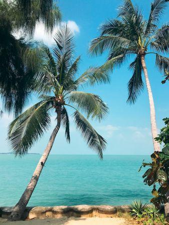 島上隨處可見的椰子樹,勾勒出蘇梅島的熱帶島嶼風情。