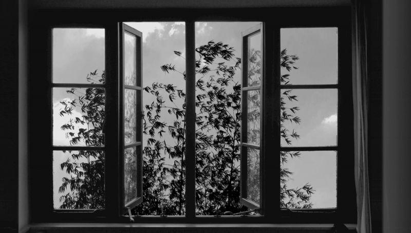 《24格》(24 Frames)劇照