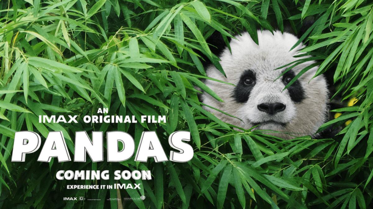 這麼萌呆合法嗎?IMAX原創紀錄片《熊貓們》,看了就想馬上抱緊處裡阿~
