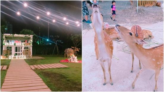 希望尋找共存的機會而不是獵殺!由3個年輕人打造的「鹿境梅花鹿生態園區」能近距離餵食與梅花鹿互動