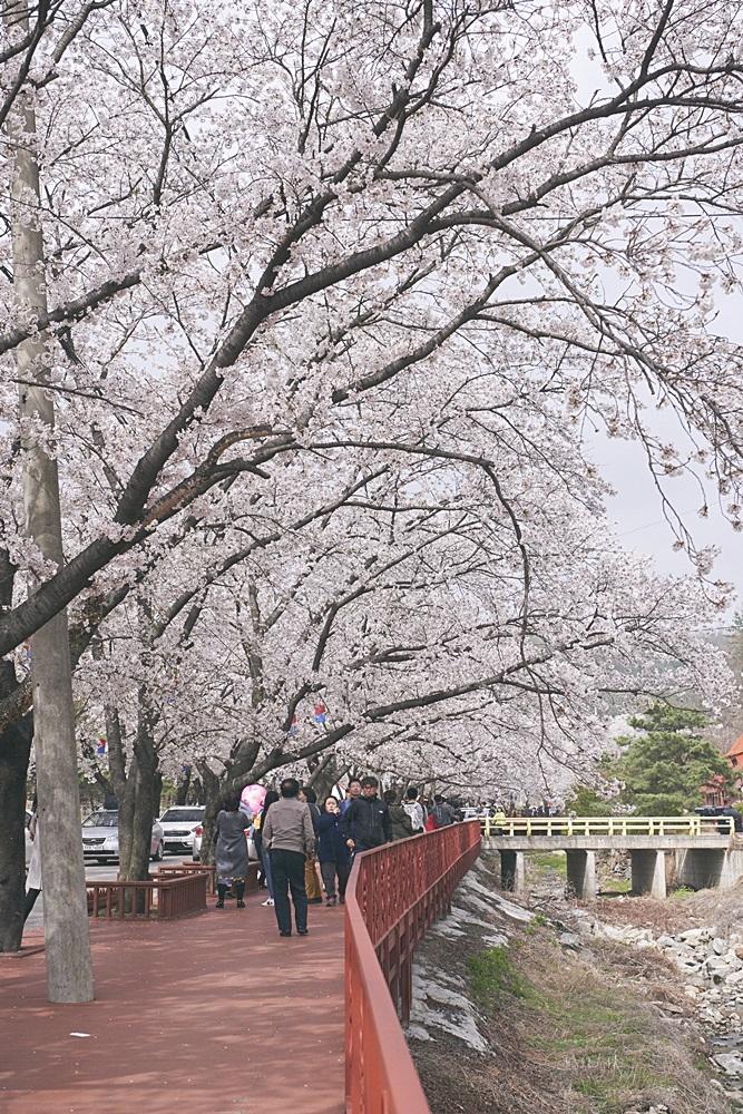 伊甸園櫻花道