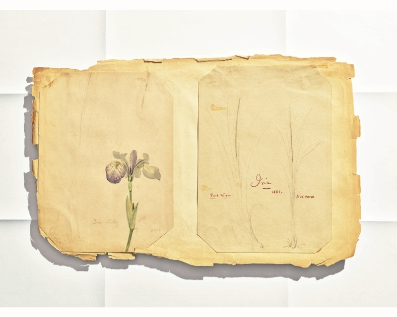 Tiffany 古典珍藏庫 1881年鳶尾花手繪稿