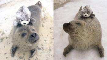 冬天來玩雪,當然也不能錯過超可愛的動物們,北海道「紋別市海洋公園」這隻小海豹萌翻了~