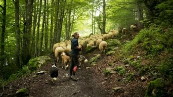 在森林裡呼吸芬多精,與可愛羊群作伴!法國女人的浪漫牧羊夢